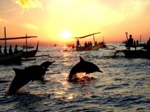 lovina-dolphin-tour-northen-bali (1)
